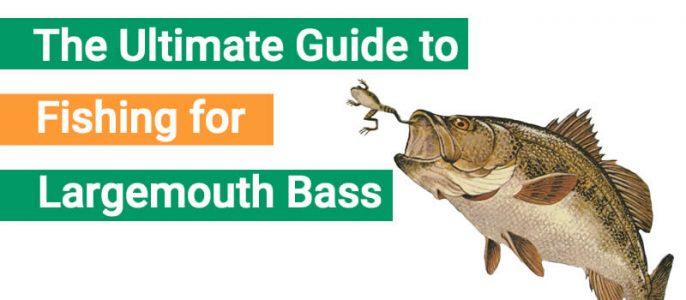 largemouth bass fishing guide