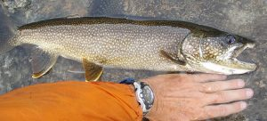 how to catch lake trout