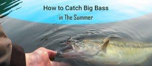 summer bass fishing tips
